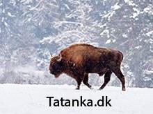 Tatanka.dk